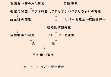 にきびの発生.jpg